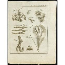 1777 - Anatomie d'une poire...
