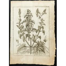 1777 - Lamier Lamium -...