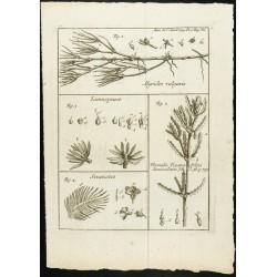 1777 - Algues et plantes...
