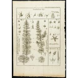 1777 - Plantes aquatiques -...
