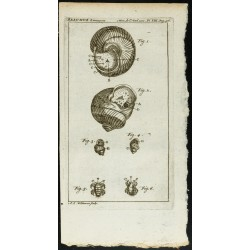 1777 - Insectes & escargot...