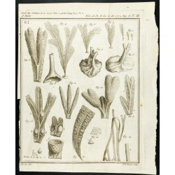 1777 - Espèces de varech -...
