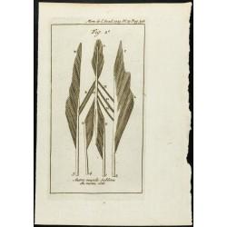 1777 - Muscles du doigts -...