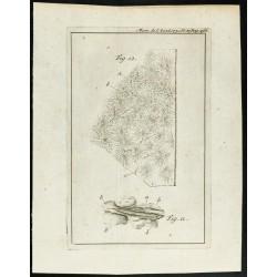 1777 - Vue au microscope...