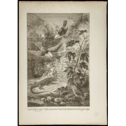 1860 - Îles Galapagos -...