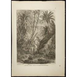 1860 - Forêt vierge à...