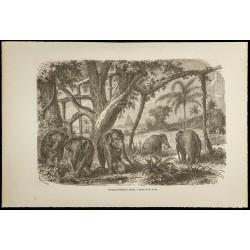 1860 - Troupeau d'éléphants...