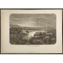 1860 - Afrique - Éléphants,...