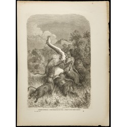 1860 - Afrique - Girafe...