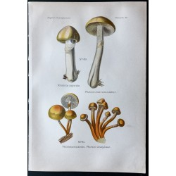 1891 - Champignons -...