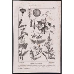 1840 - Planche de Botanique