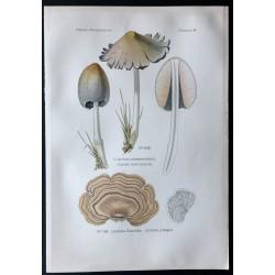 1891 - Champignons - Coprin...