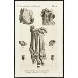 1873 - Fossile de...