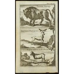 1763 - Vue de 3 animaux...