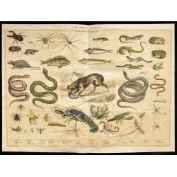 1853 - Les animaux...