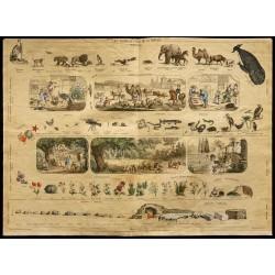 1853 - Les 3 règnes de la...