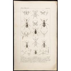 1844 - Carabes et Coléoptères