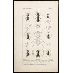 1844 - Carabidae et...