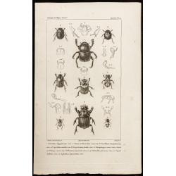 1844 - Scarabées (Ateuchus,...