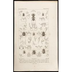 1844 - Scarabées (Aegialia,...