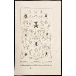 1844 - Scarabées (...