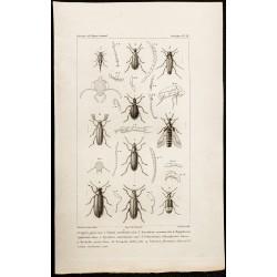 1844 - Coléoptères (Lagria,...