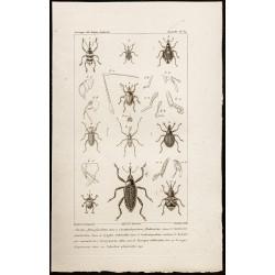 1844 - Coléoptères (Bagous,...