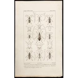 1844 - Coléoptères...