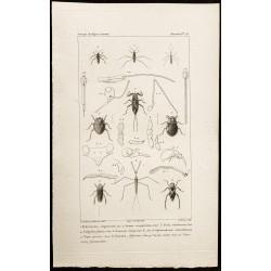 1844 - Hémiptères