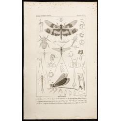 1844 - Libellules - Éphémère