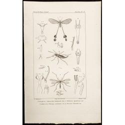 1844 - Névroptères
