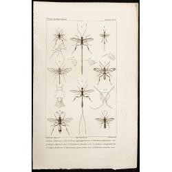 1844 - Insectes hyménoptères