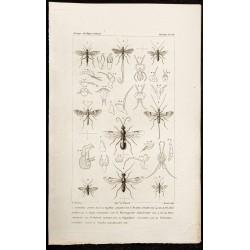 1844 - Guèpes hyménoptères