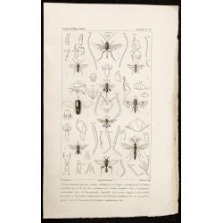 1844 - Hyménoptères