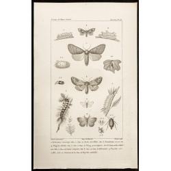1844 - Papillons Lépidoptères