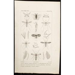 1844 - Insectes diptères