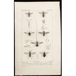 1844 - Diptères (Toxophora,...