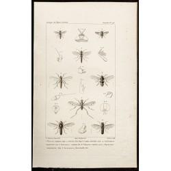 1844 - Diptères (Thereva,...