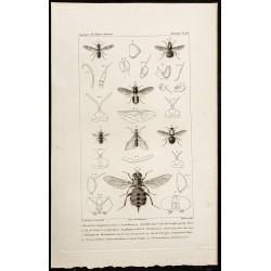 1844 - Diptères