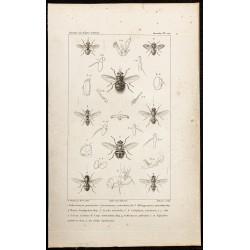 1844 - Diptères (Mouches)
