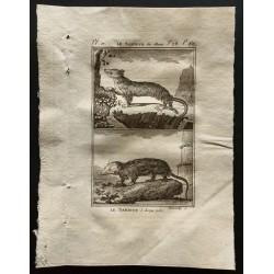 1799 - Le sarigue des...
