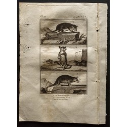 1799 - Le marmose, le...