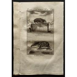 1799 - Le tendrac et son petit