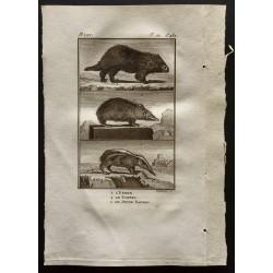 1799 - L'urson / Le tanrec