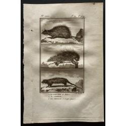1799 - Le porc épic / Le...
