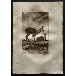 1799 - Le musc