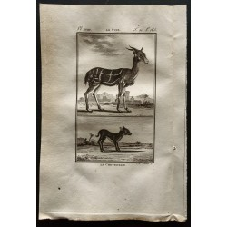 1799 - Le guib / Le chevrotain