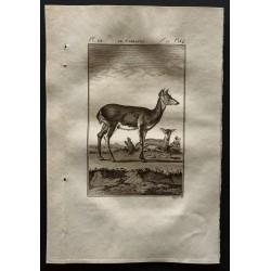 1799 - Le carlacou