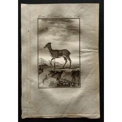 1799 - La Grimm