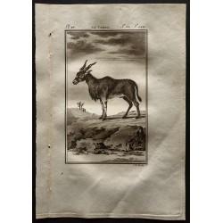 1799 - Le Canna